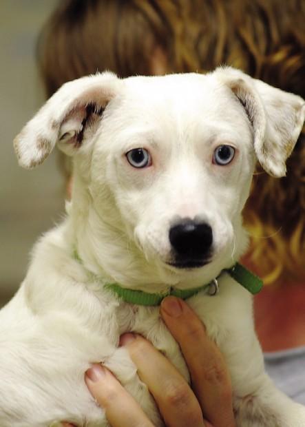 Pets of the Week for Nov  16 | Lifestyles | fremonttribune com