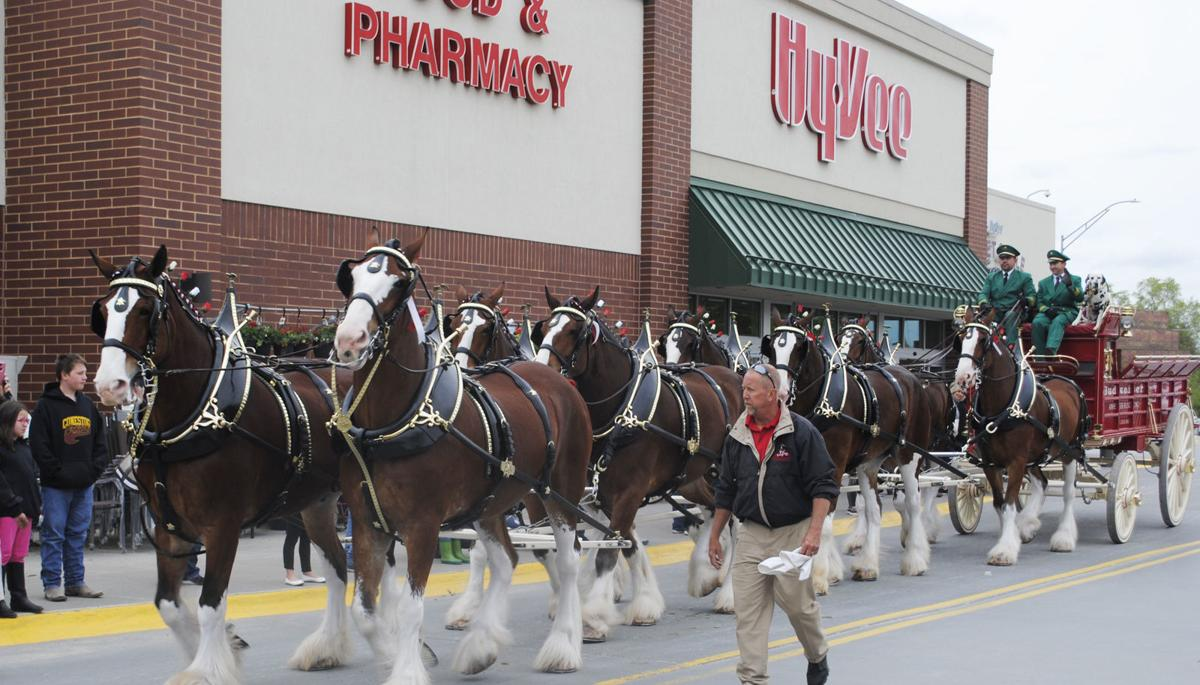 Clydesdales 1