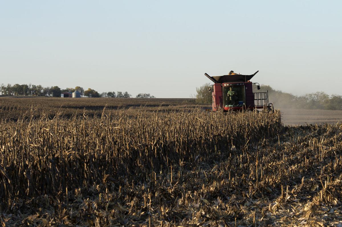 Fall Harvest, 10.17.2017