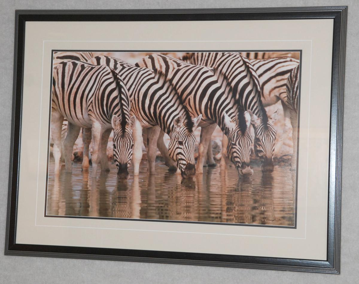 Photograph of zebras by Tom Mangelson in Hinds Gallery