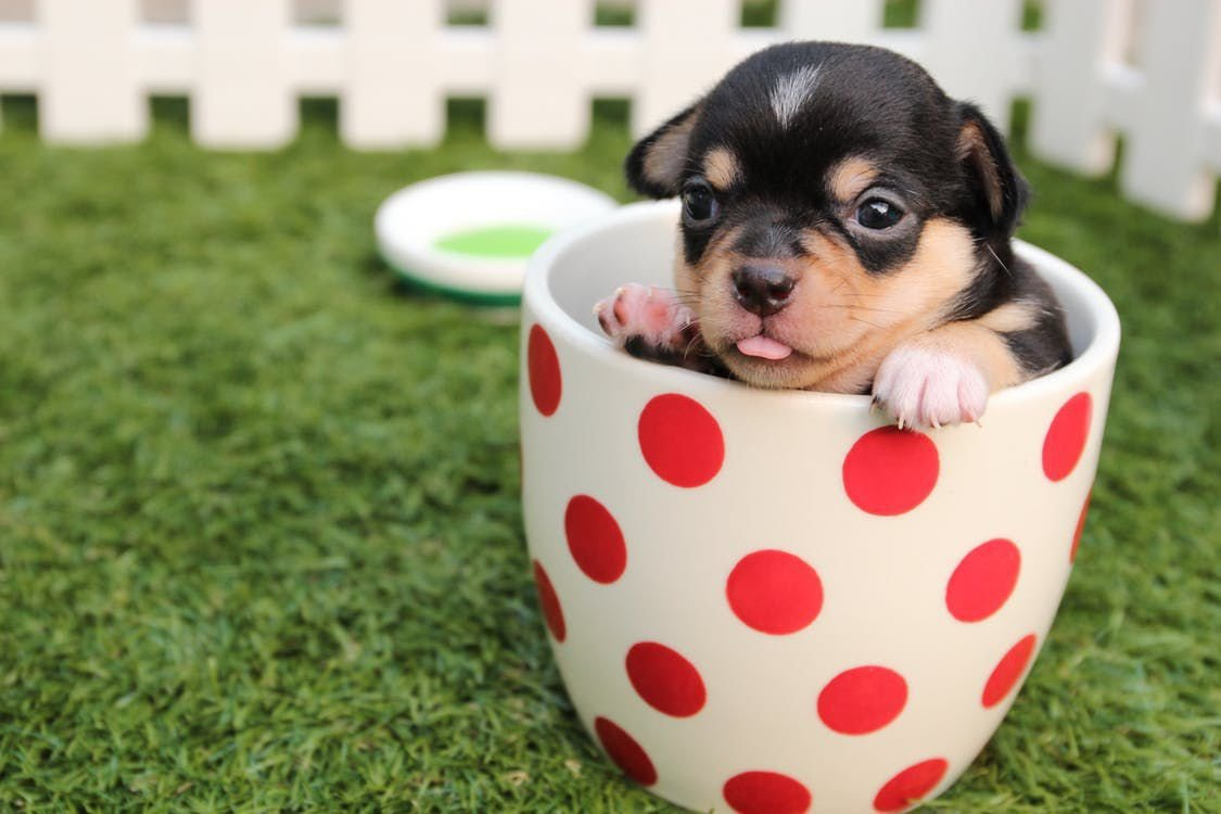 Things To Know About Having a Small Dog