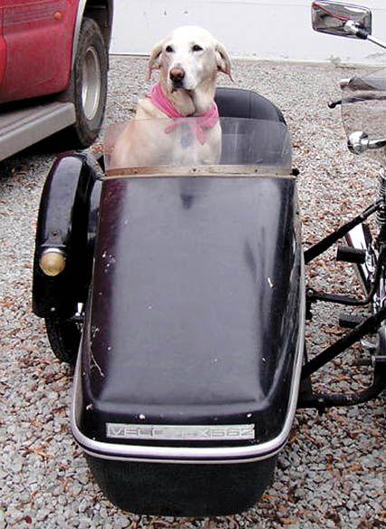 dog takes her seat next to man in motorcycle sidecar local news. Black Bedroom Furniture Sets. Home Design Ideas