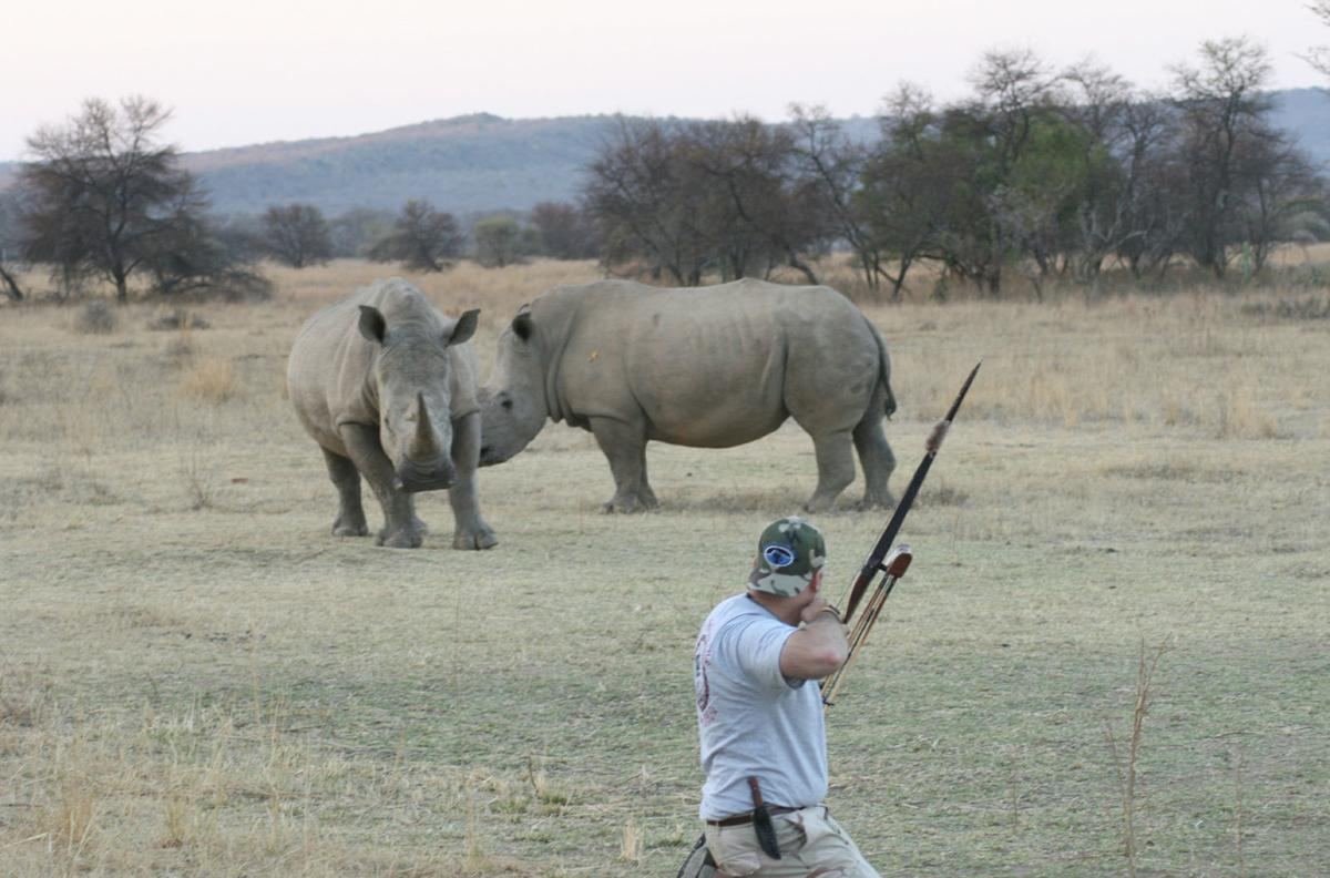 Shooting rubber-tipped arrow at rhino
