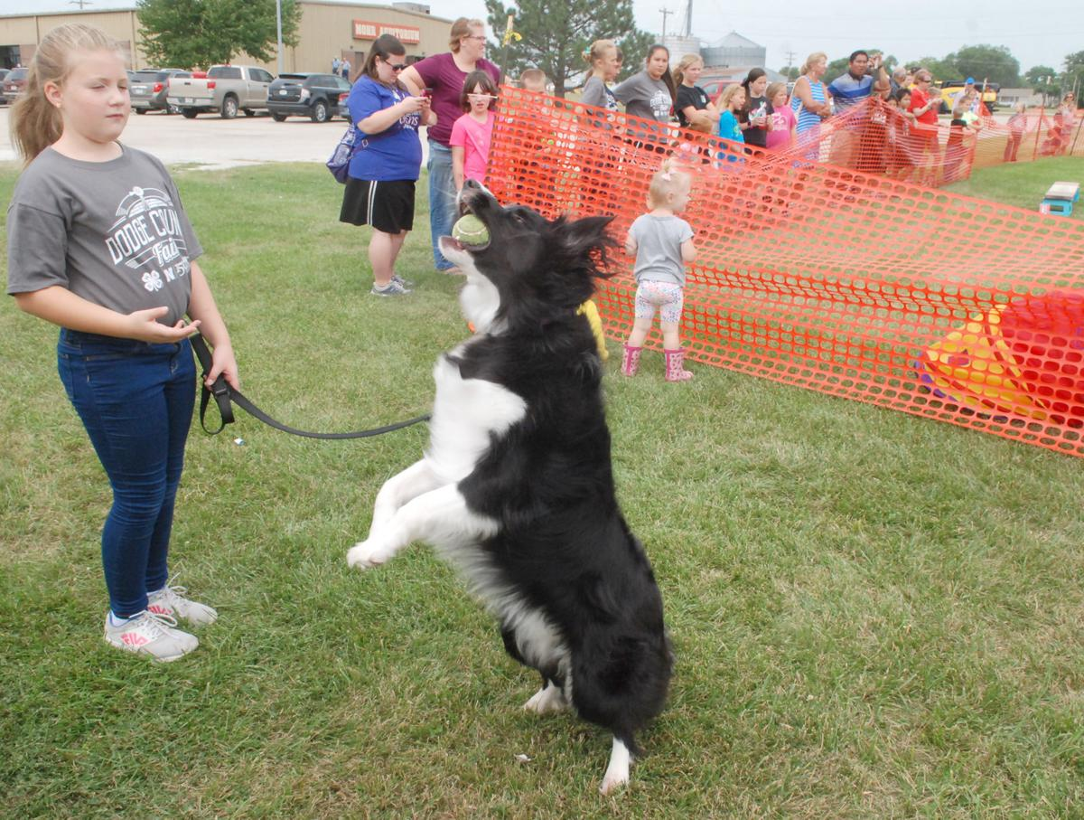 Girl watching dog catch ball at Dodge County Fair