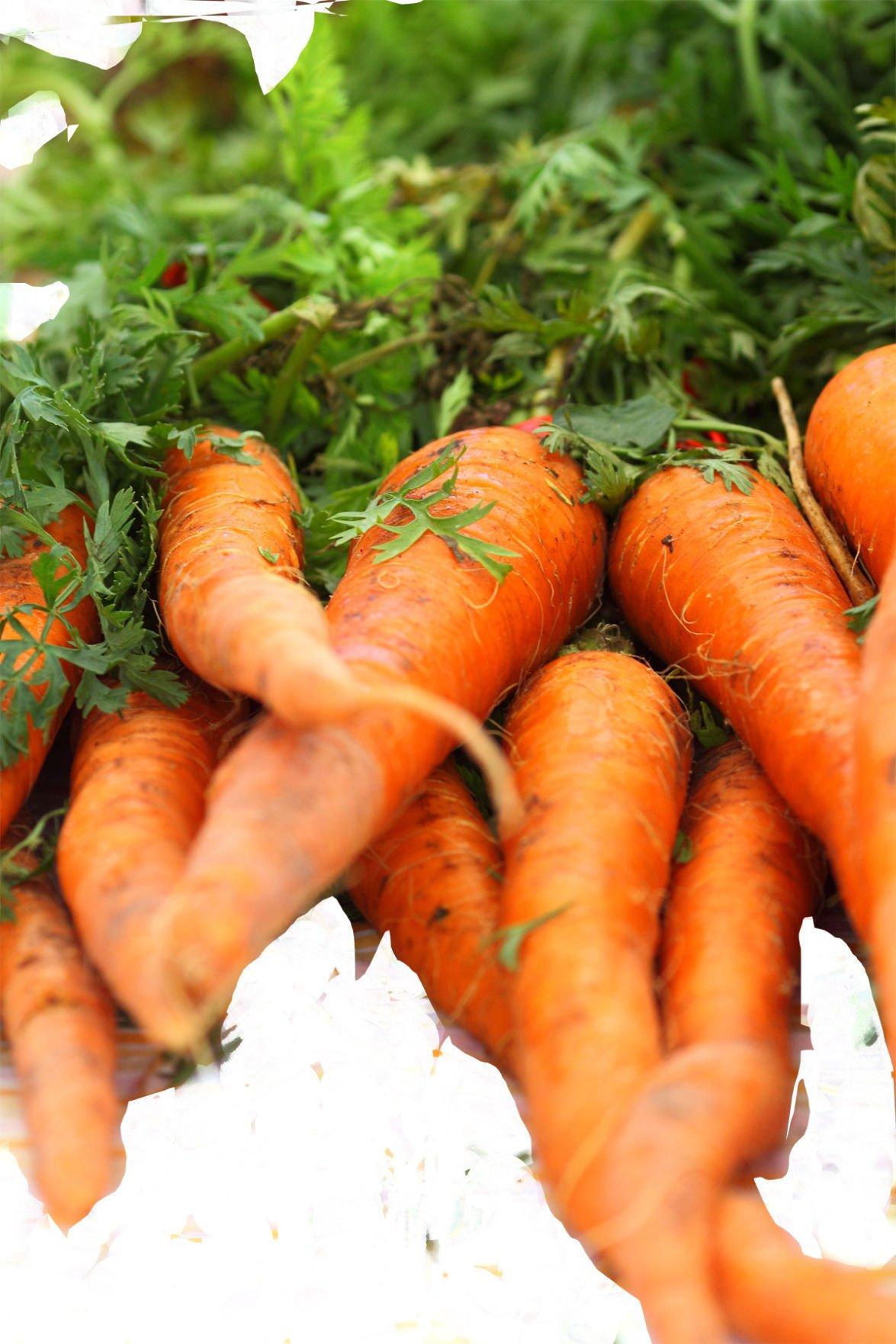 06-08_B3_carrotts