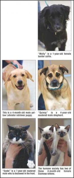 Dodge County Humane Society Is On The Corner Of Luther And