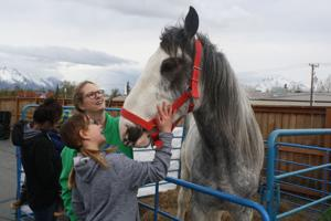Annual Agriculture Day brings the farm to Birchtree Charter School