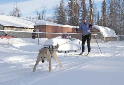 Skijor school 1