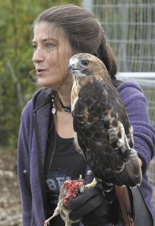 Alaska Wild Bird Rehab