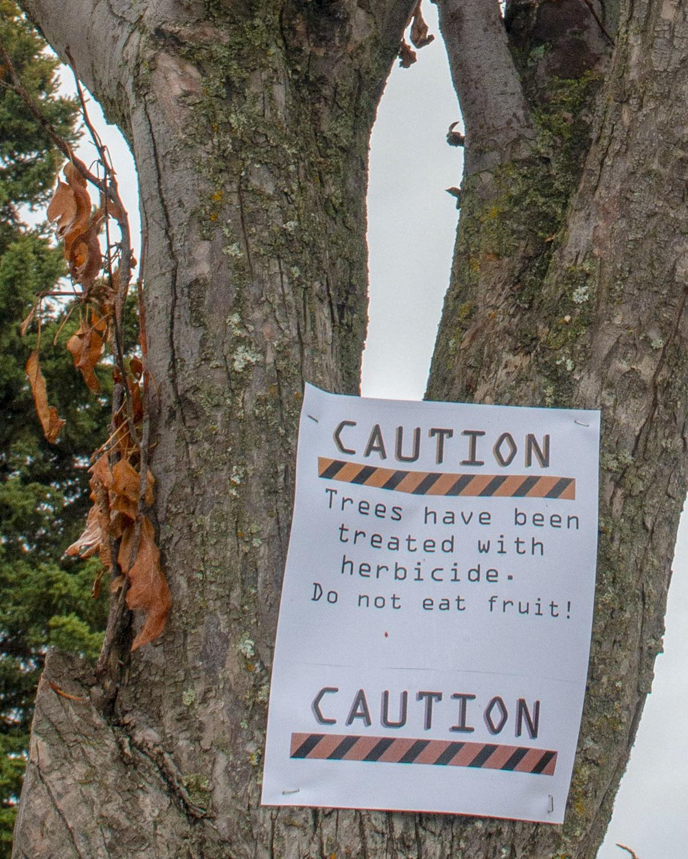 JBER'S BASH program using tree removal project