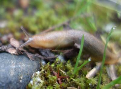 Rozell - slugs
