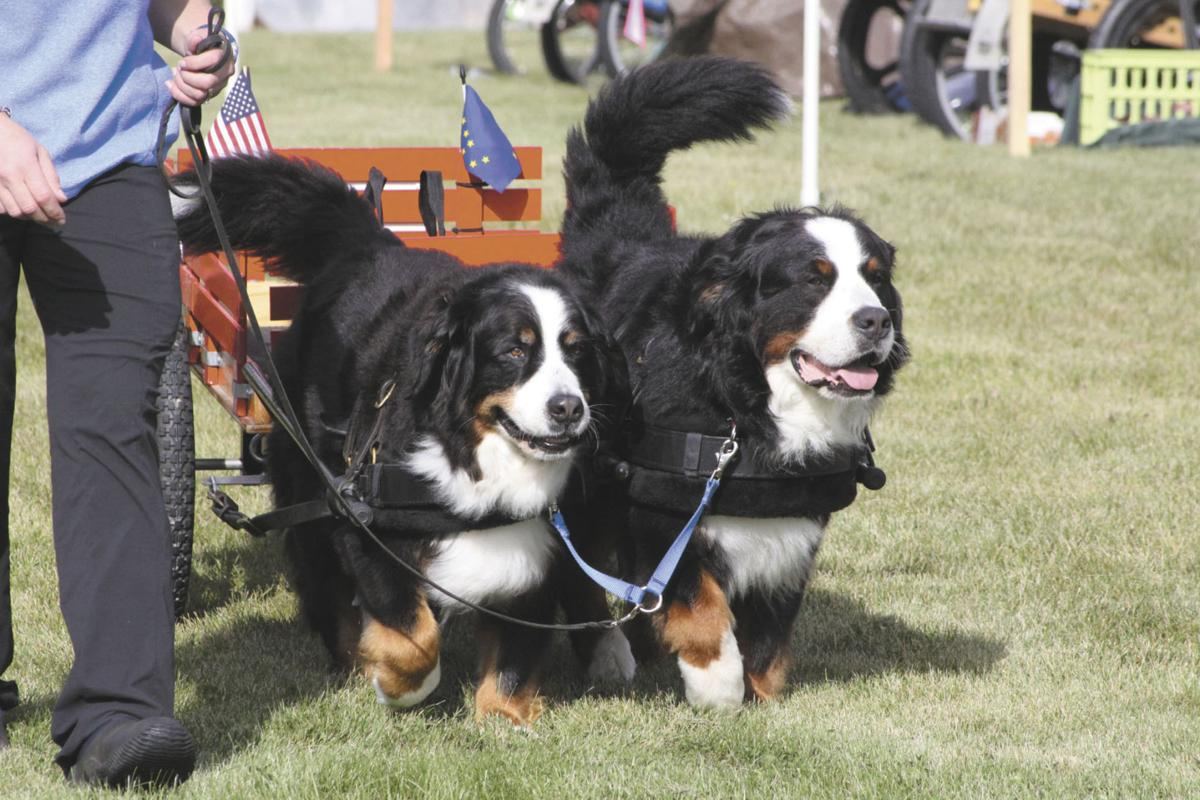 Best In Show Test Draft Features Carts And Dogs Living