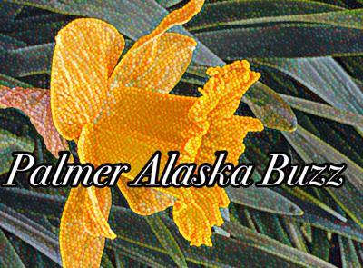 Palmer Buzz