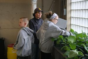 Cabbage class: Course offers tips on growing Alaska's green giants