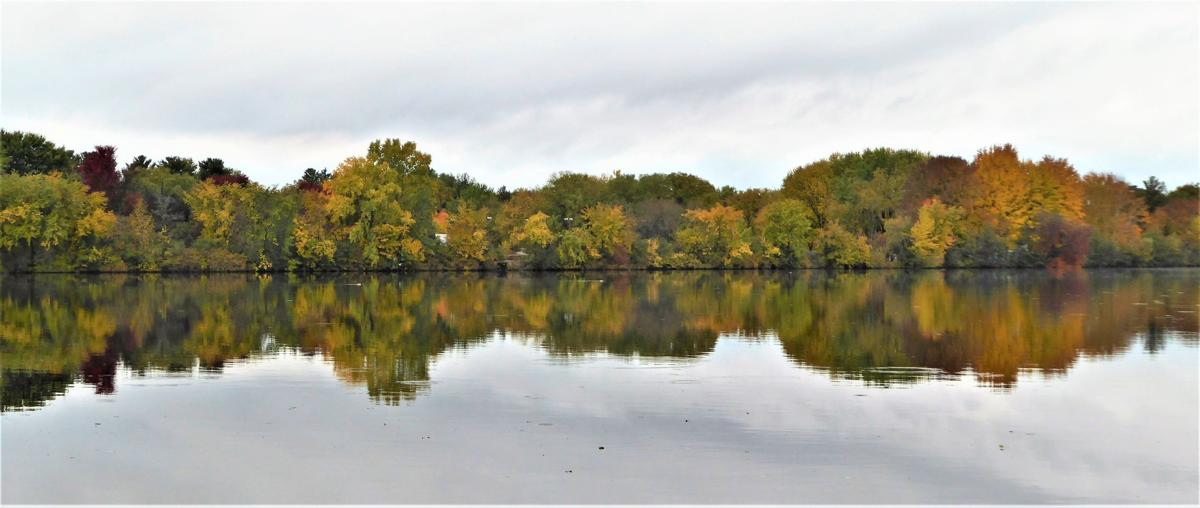 Wisconsin River trees