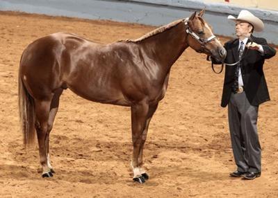 Horse champ