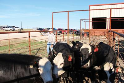 Association cattle sale today