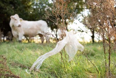 Plastic bags are killing horses and cows across the state. What's Texas to do?