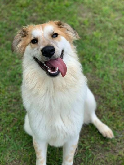 Pet of the week: Bentley