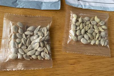 At least 187 Texans received mystery seeds mailed from China. State officials warn they shouldn't be planted.