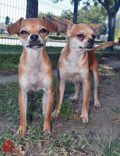 Peanut and Macho