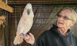 Exotic bird rescue is Wilton woman's mission | News