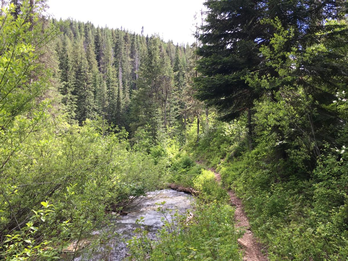 The nearby Great Outdoors: Trail #501