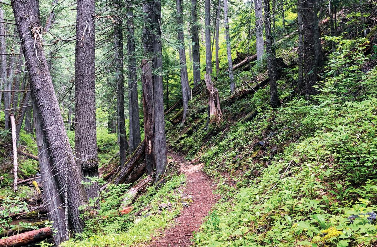 The nearby Great Outdoors: Malin Ridge Trail #197
