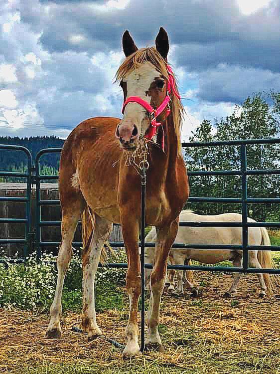 Wild Horse Adoption