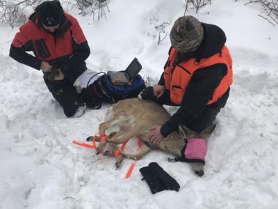 deer_capture.jpeg