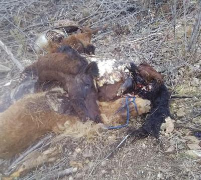 Hunters discover seven horse carcasses
