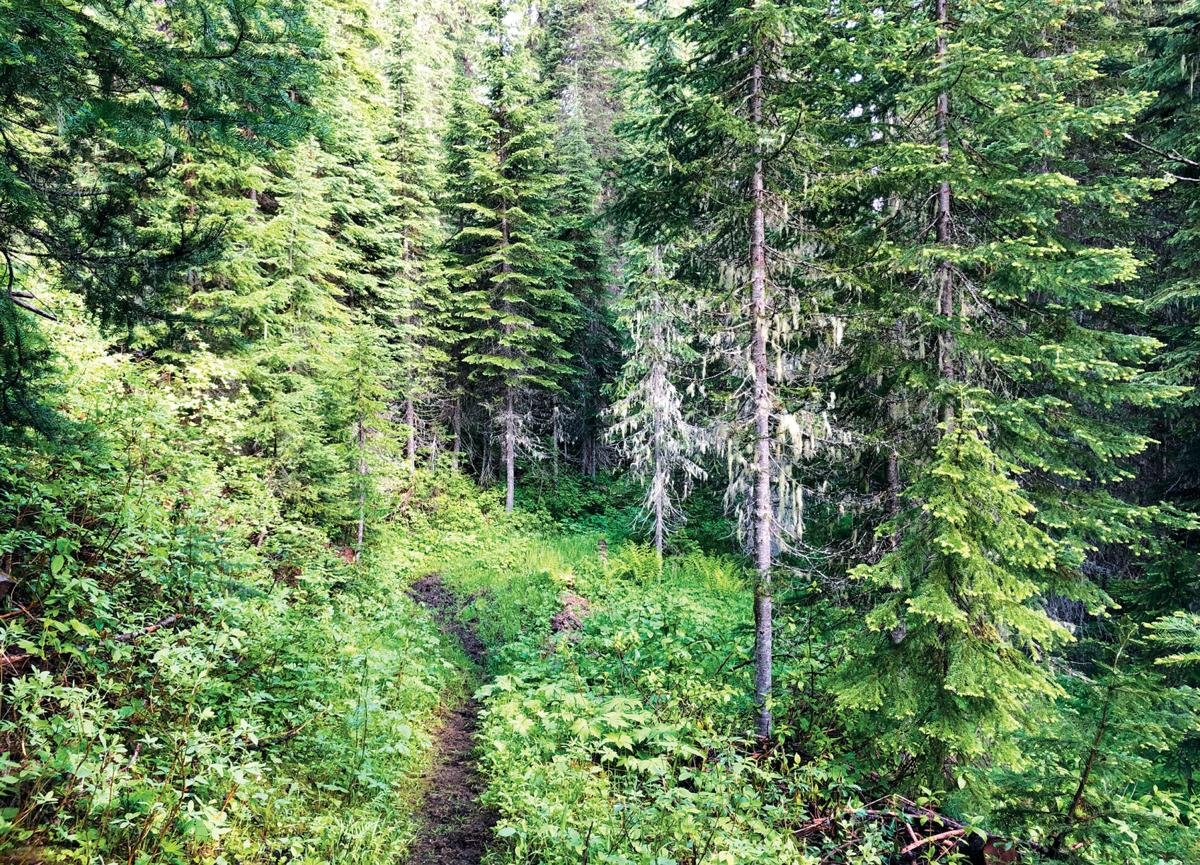 The nearby Great Outdoors: Twin Creek Trail #233