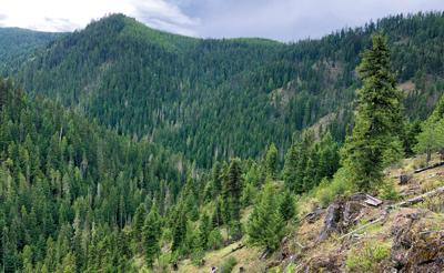 The nearby Great Outdoors: Fishhook Creek