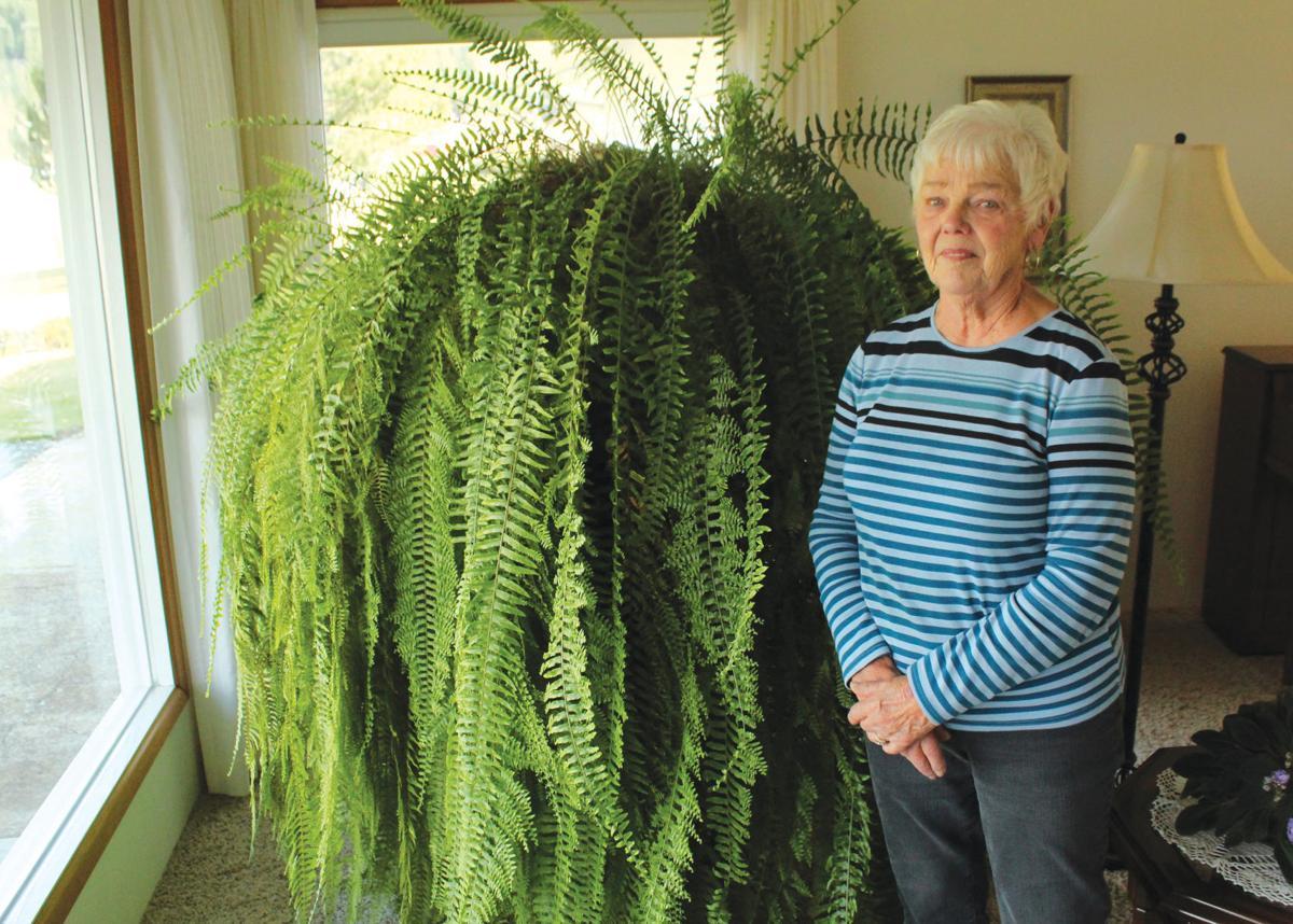 Massive fern continues to flourish