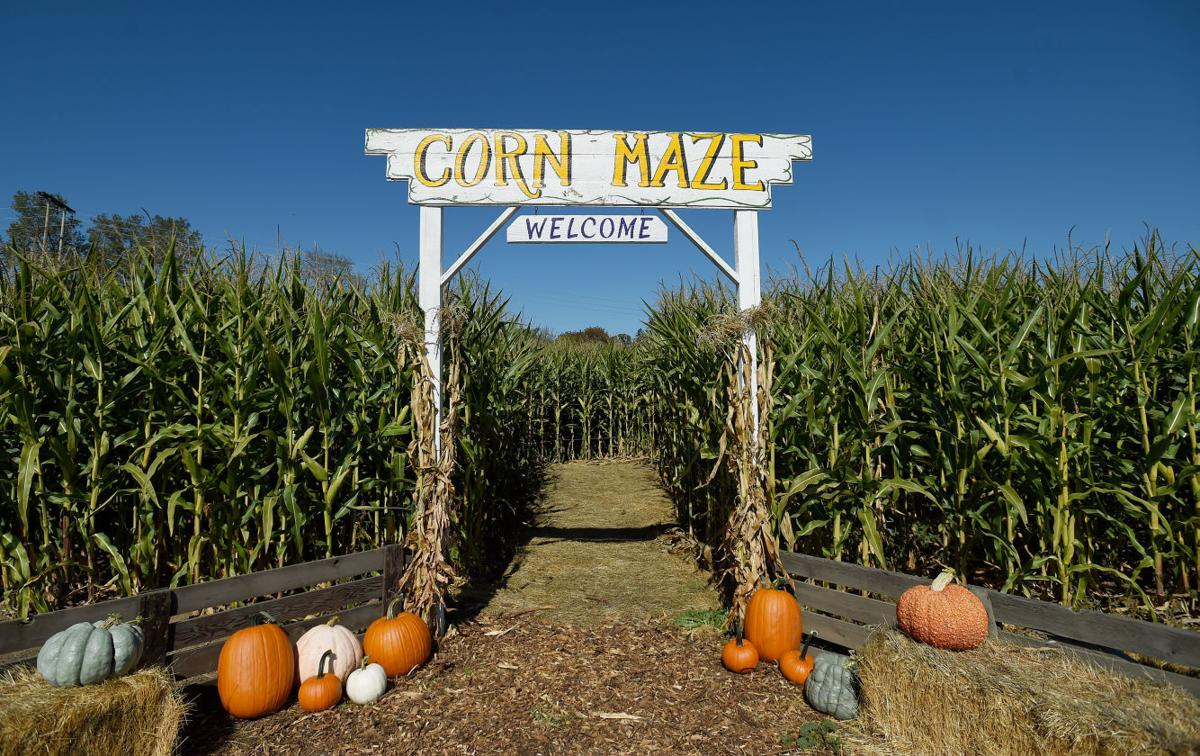 Highway 20 corn maze open for second year | Local ...