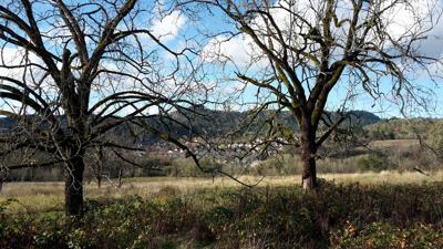 timberhill-ye