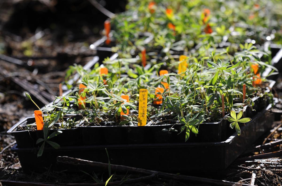 Plantings at Bald Hill 02