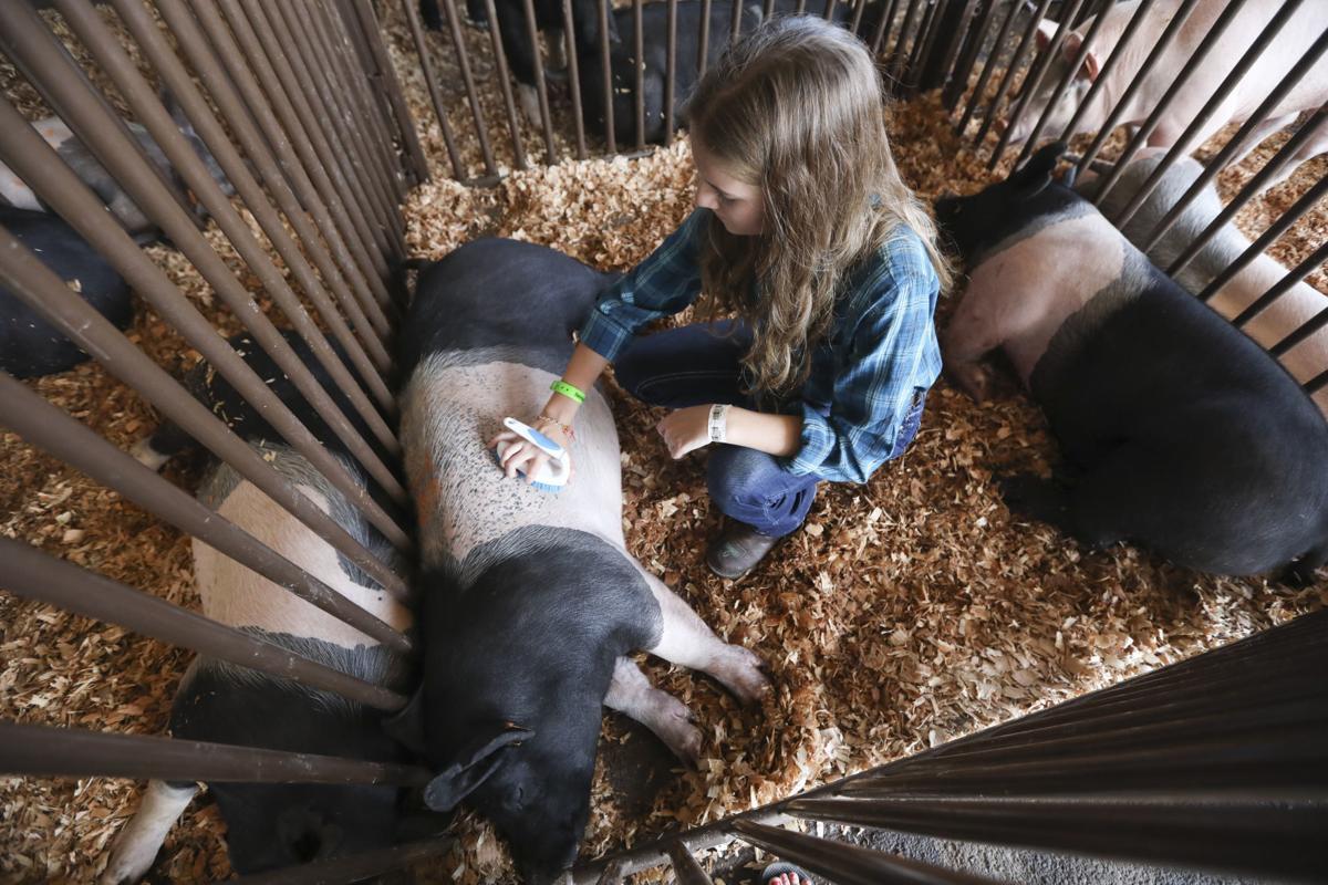 Benton County Fair Photo 3