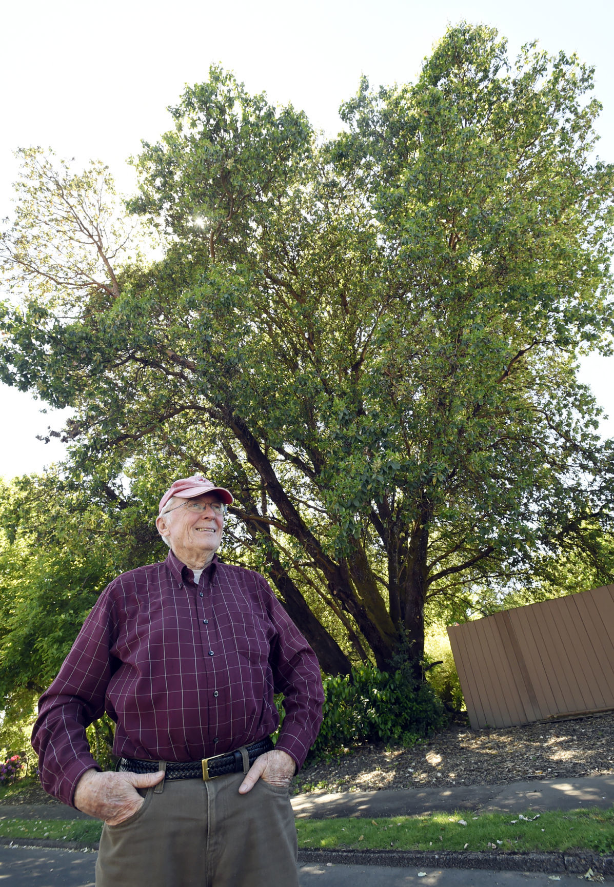 heritage-tree-madrone