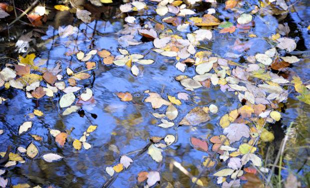 111314-cgt-nws-richard-arterbury-sequoia-creek-02-abc