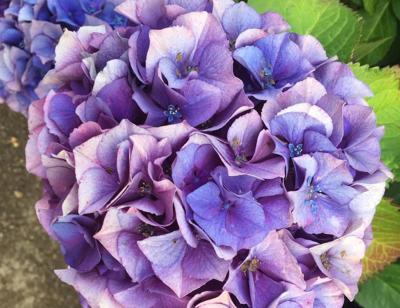 Purple Boom 7-17-19
