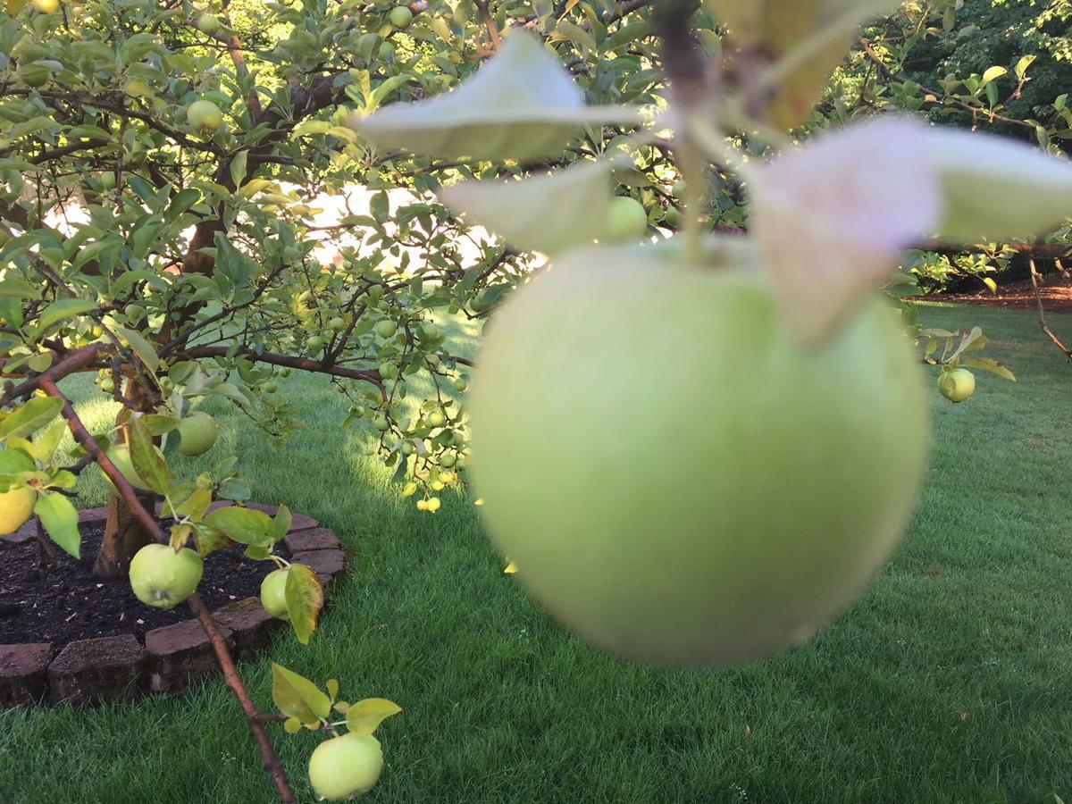 Apple 8-12-18