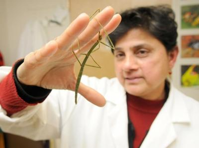 A love of bugs: Entomologist Sajaya Rao uses insects as teaching aids