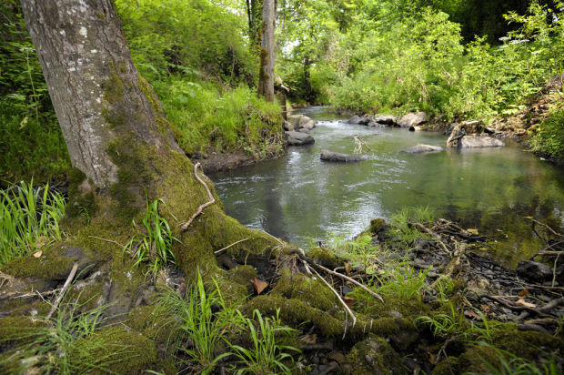 Urban stream tour to focus on Oak Creek and unnamed tributary