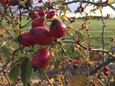 Berry Landscape 11-10-17