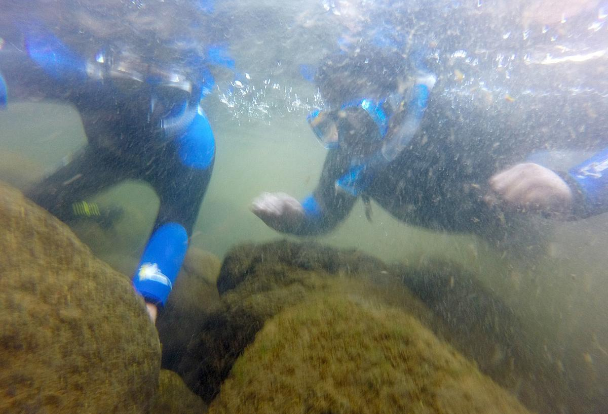 102118-adh-nws-Snorkeling Field Trip15-my