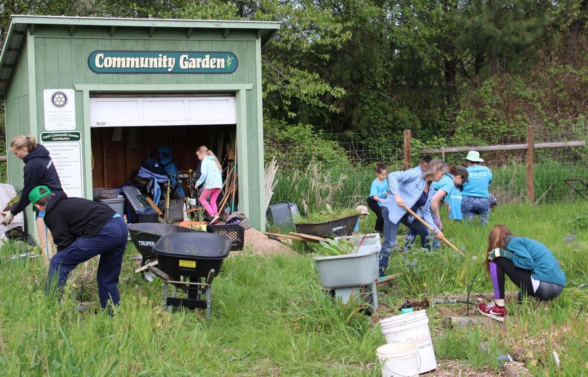 Lupe's Community Garden