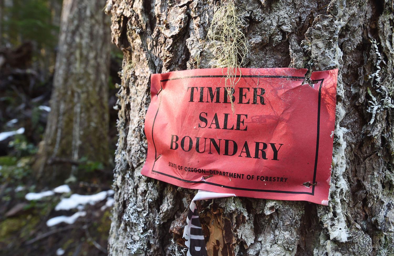Linn county oregon boundaries in dating
