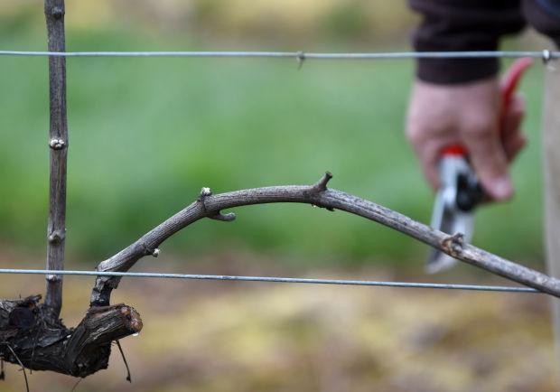 032315-cgt-nws-winter-wineries-02-ac