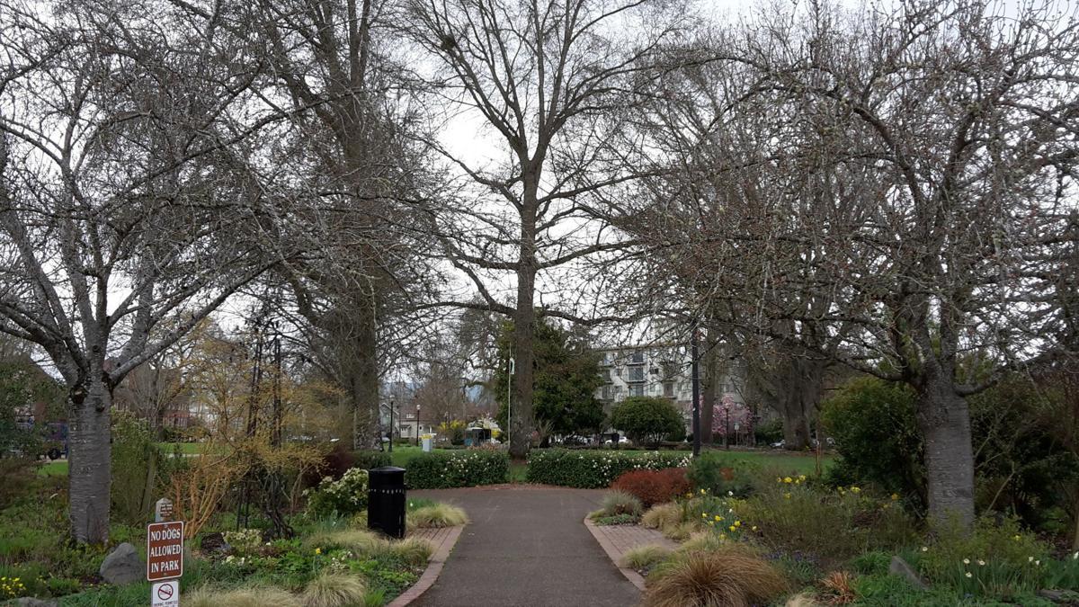 central park-main18